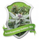 Autoflowering Outdoor Mix 5 fem