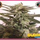Bubble Cheese 10 fem
