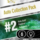 Auto Collection N2 6 fem