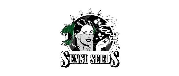 Sensi seeds Pack de 10 semillas