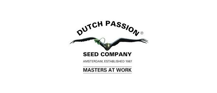 Dutch Passion Pack de 10 semillas