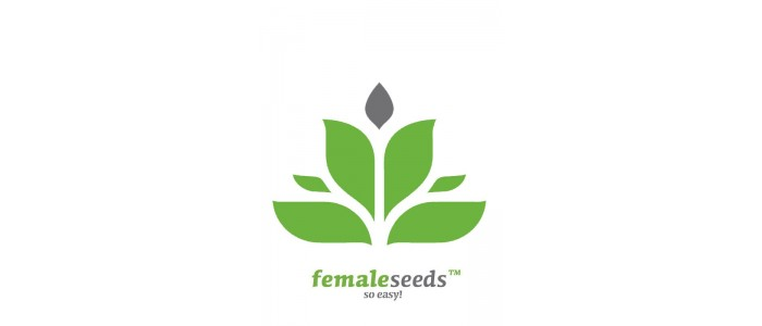 Female Seeds Pack 4
