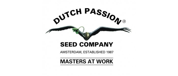 Dutch Passion C