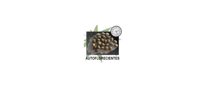 High Qualite Seeds R