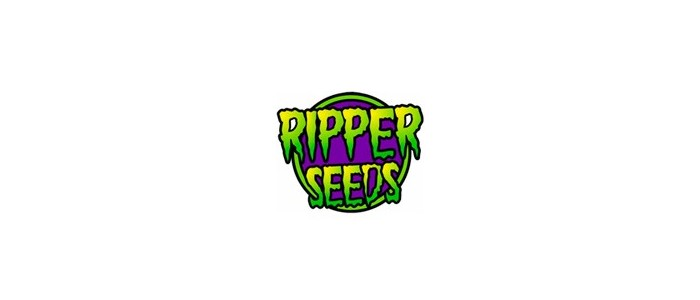 Ripper Seeds pack de 5 semillas