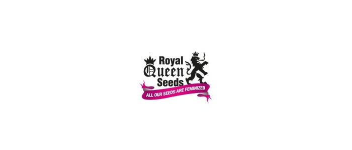 Royal Queen pack 1 semilla